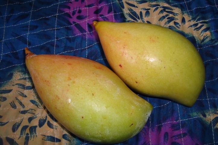 mango-chutny1